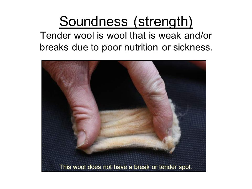 Soundness (strength) Tender wool is wool that is weak and/or breaks due to poor nutrition or sickness.