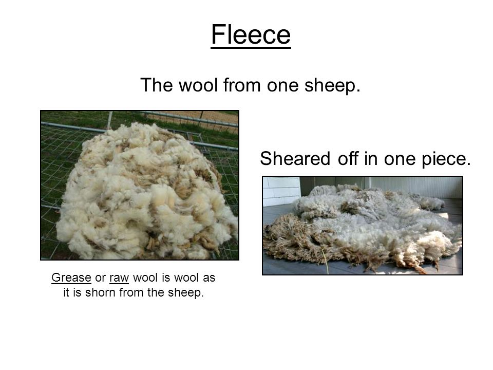 Fleece The wool from one sheep.