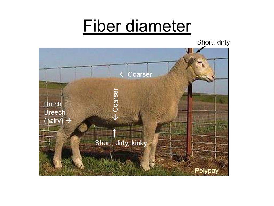 Fiber diameter Short, dirty  Coarser  Coarser