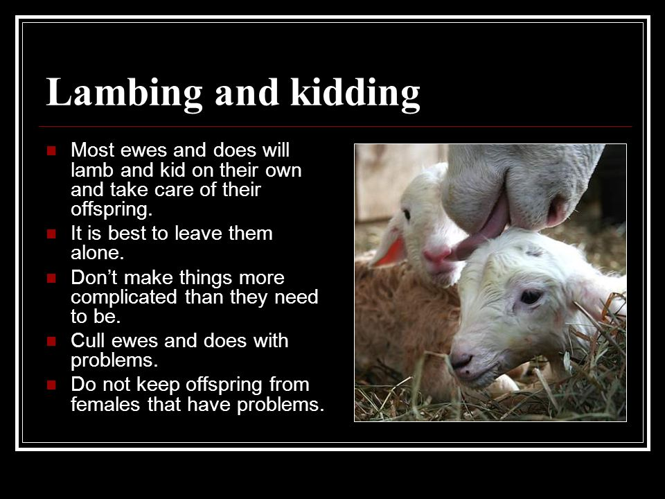 Lambing and kidding Most ewes and does will lamb and kid on their own and take care of their offspring.