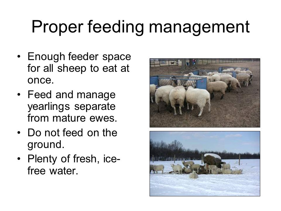 Proper feeding management