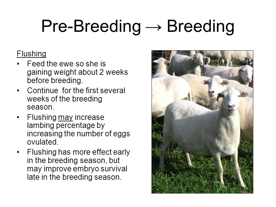 Pre-Breeding → Breeding