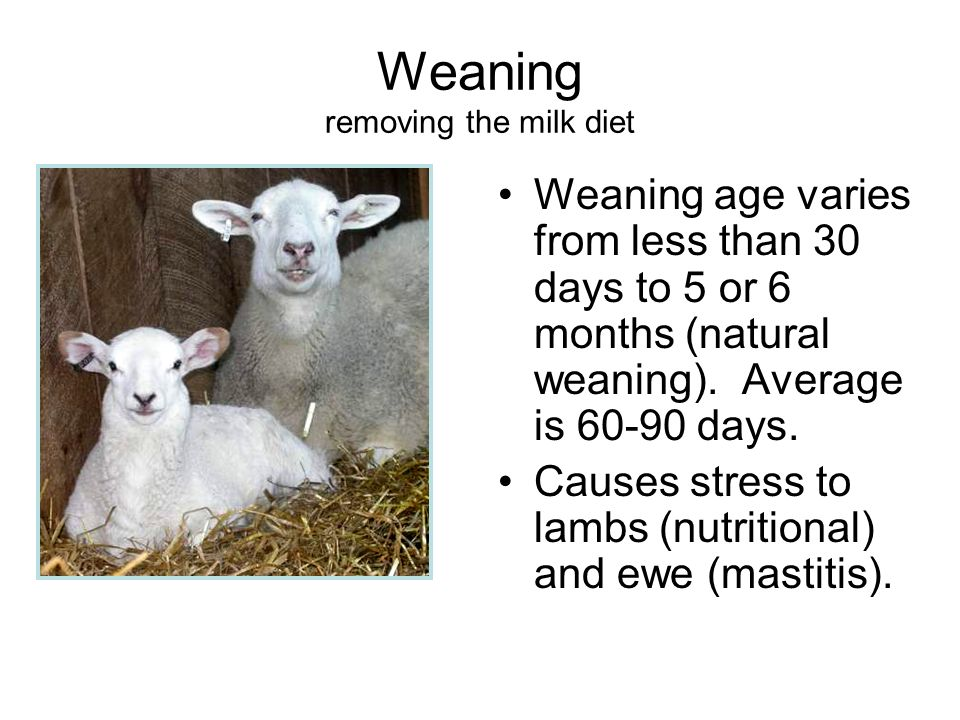 Weaning removing the milk diet