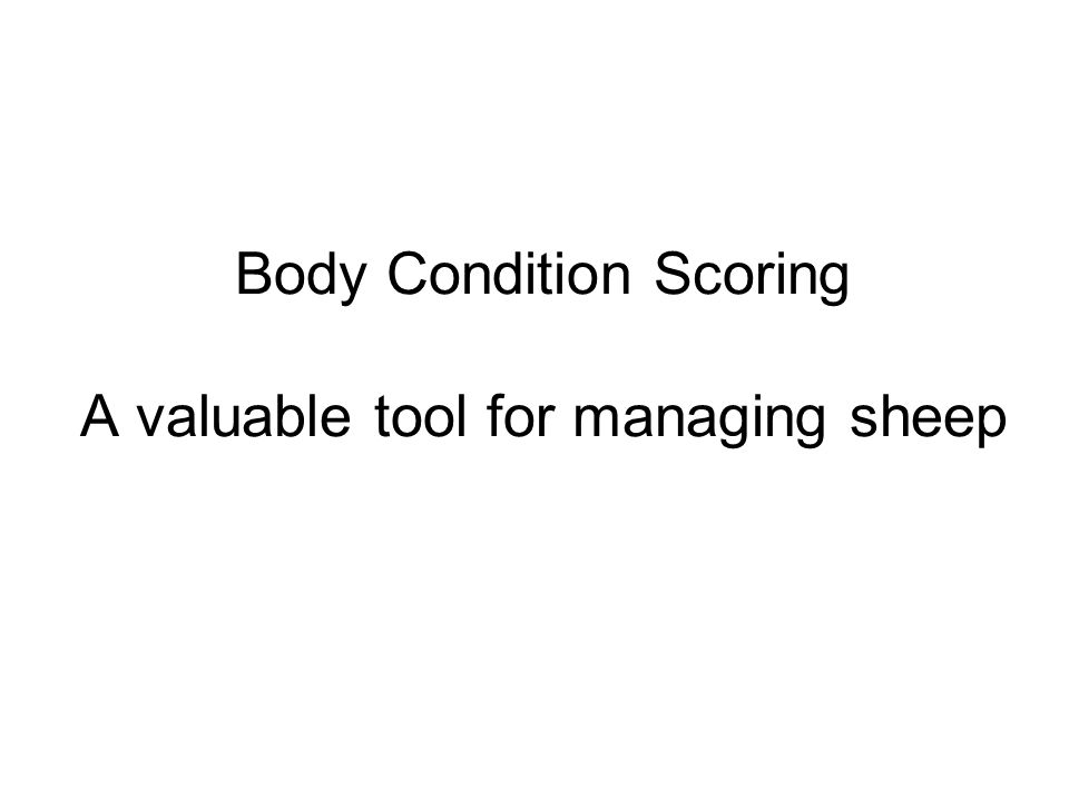 Body Condition Scoring A valuable tool for managing sheep