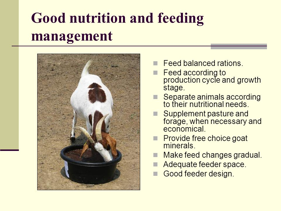 Good nutrition and feeding management