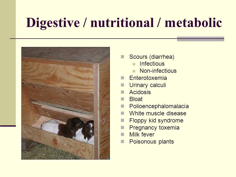 Digestive / nutritional / metabolic