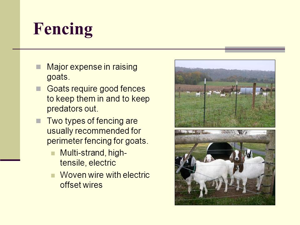 Fencing Major expense in raising goats.