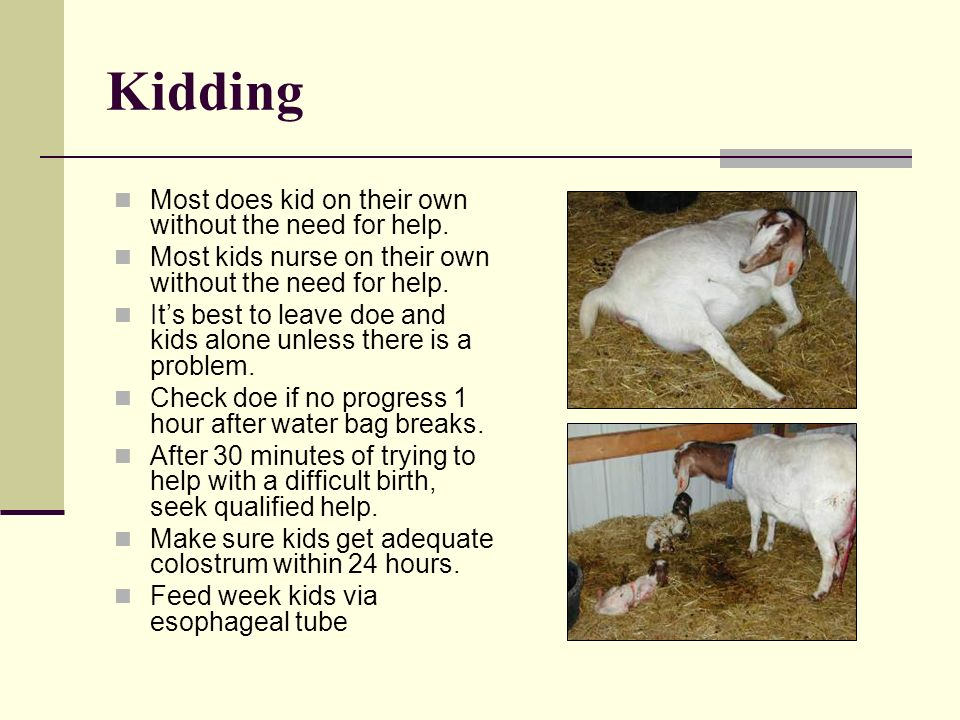 Kidding Most does kid on their own without the need for help.