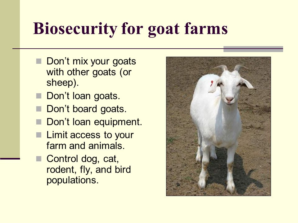 Biosecurity for goat farms