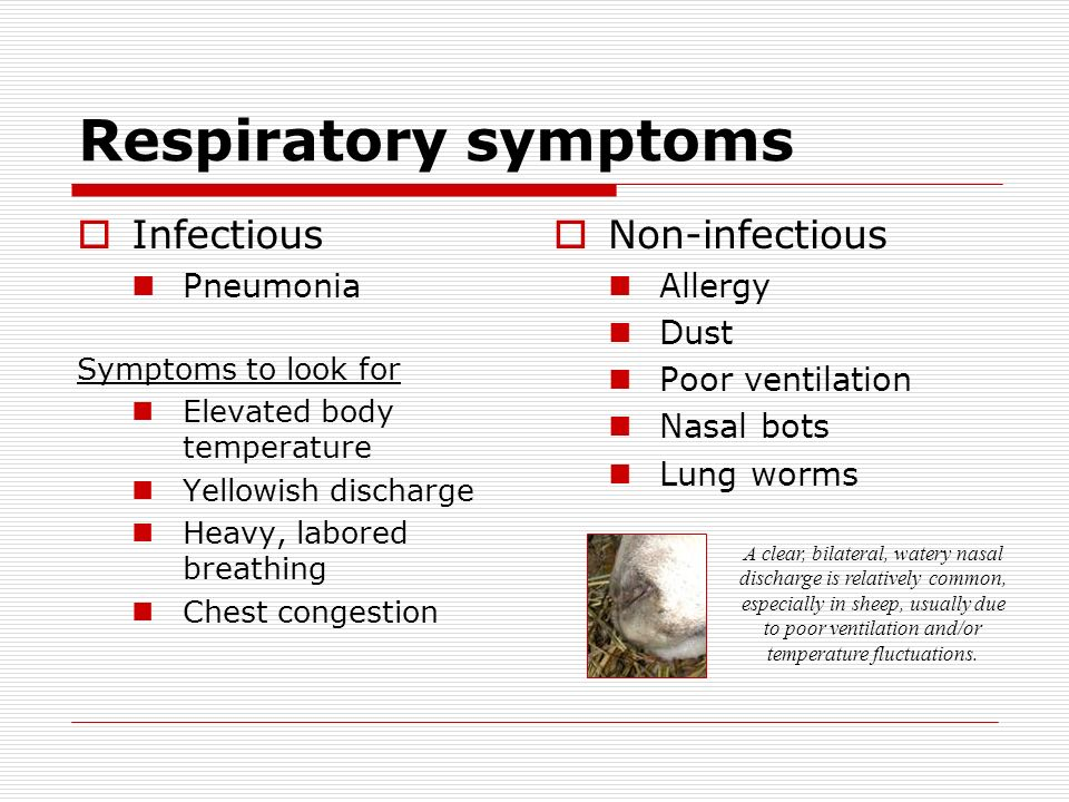 Respiratory symptoms Infectious Non-infectious Pneumonia Allergy Dust
