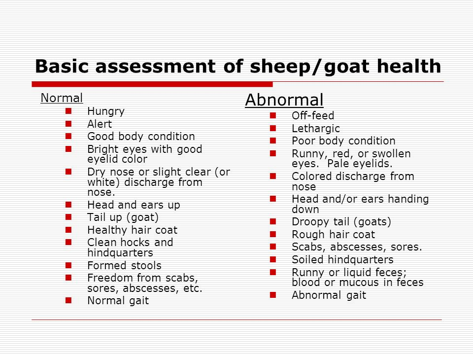 Basic assessment of sheep/goat health