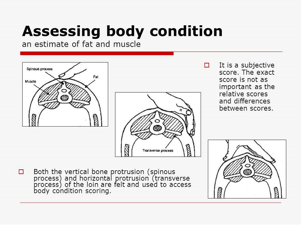 Assessing body condition an estimate of fat and muscle