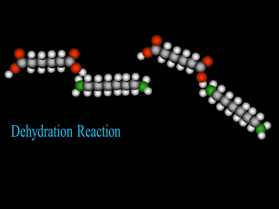 Dehydration Reaction