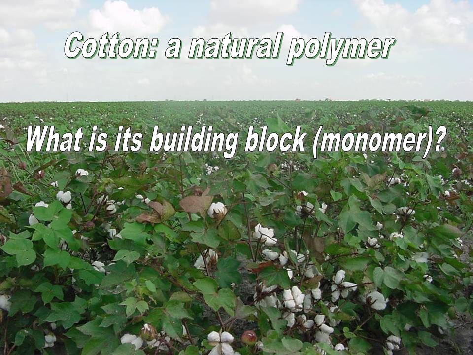 Cotton: a natural polymer