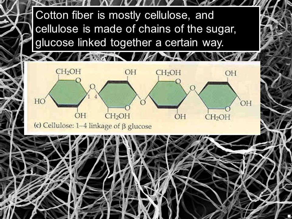 Cotton fiber is mostly cellulose, and cellulose is made of chains of the sugar, glucose linked together a certain way.