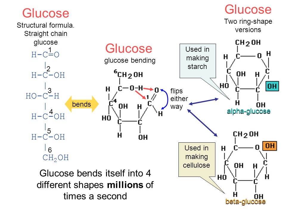 Glucose Two ring-shape versions