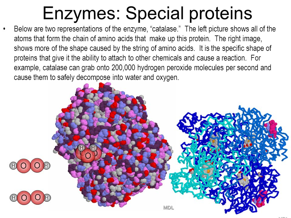 Enzymes: Special proteins