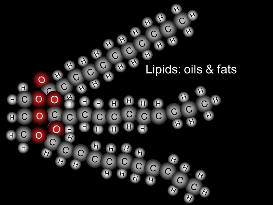 O H C Lipids: oils & fats H O O H C C H C O H C O H O H C H