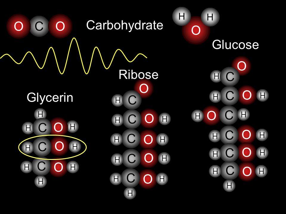 O C O Carbohydrate O Glucose O Ribose C O C C O Glycerin O C C O C O C