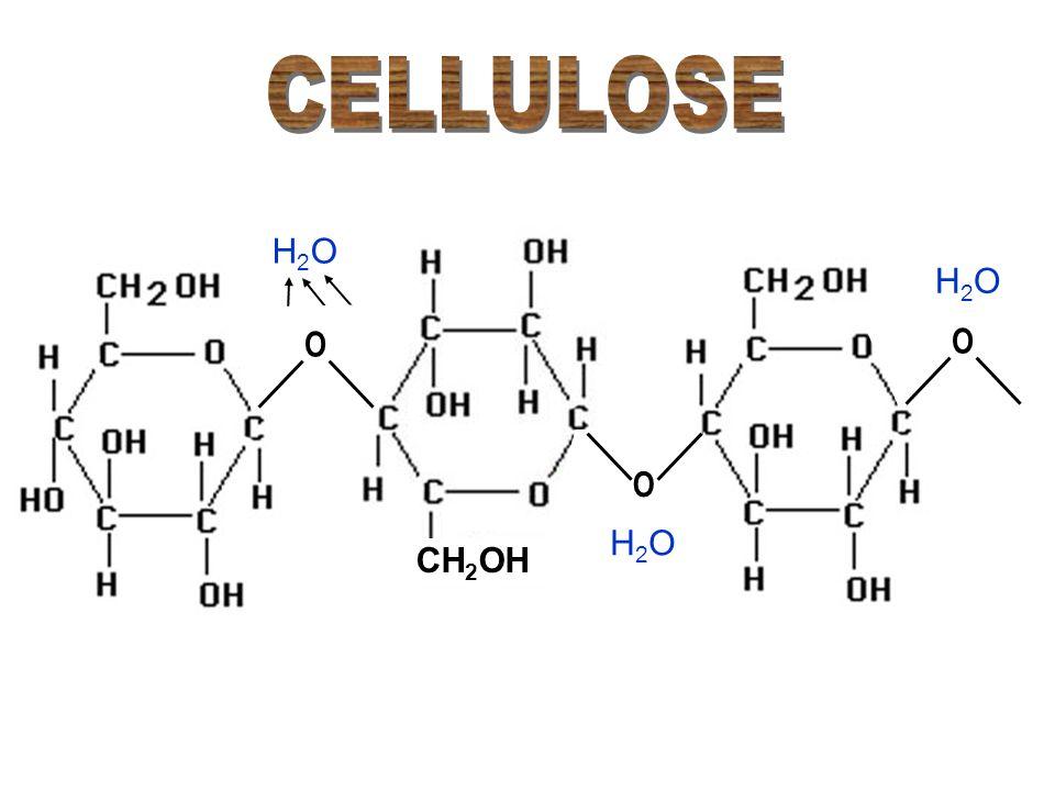 CELLULOSE H2O H2O O O O H2O CH2OH