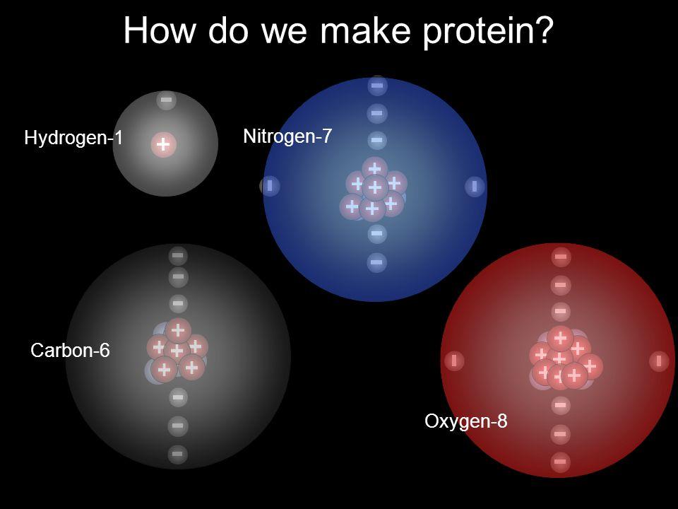 How do we make protein Hydrogen-1 Nitrogen-7 Carbon-6 Oxygen-8