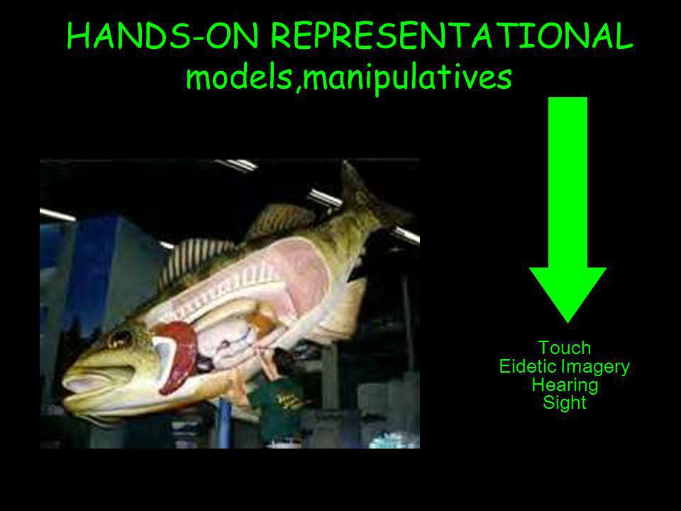 HANDS-ON REPRESENTATIONAL models,manipulatives