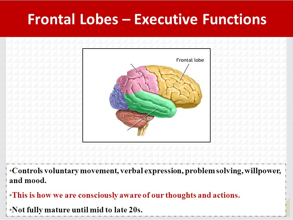 Frontal Lobes – Executive Functions