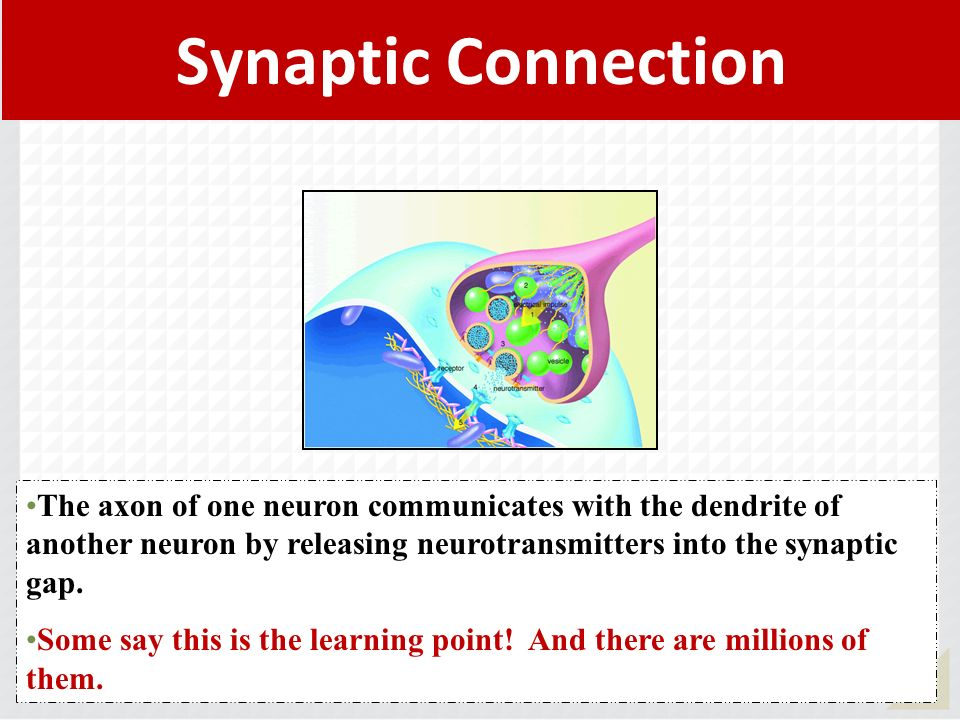Synaptic Connection The axon of one neuron communicates with the dendrite of another neuron by releasing neurotransmitters into the synaptic gap.