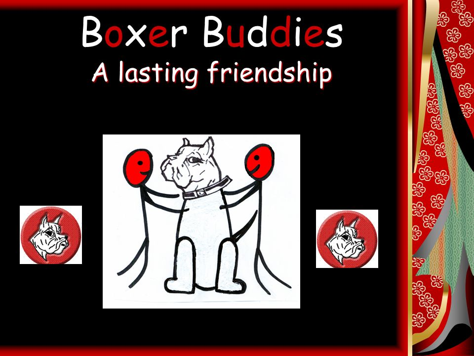 Boxer Buddies A lasting friendship