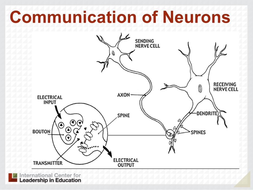 Communication of Neurons