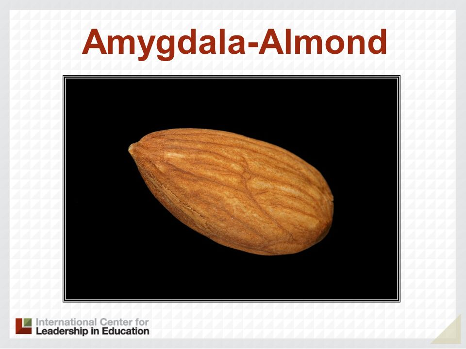 Amygdala-Almond