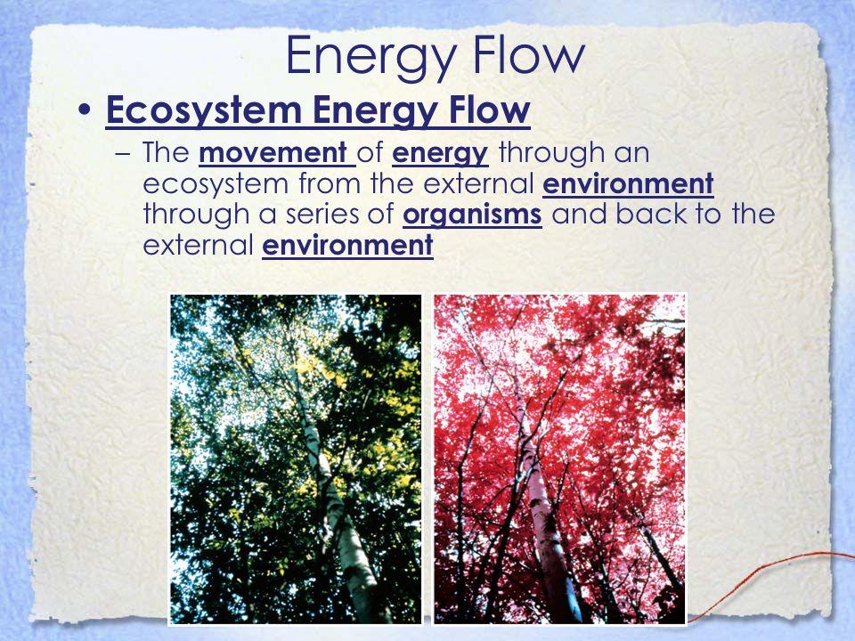 Energy Flow Ecosystem Energy Flow