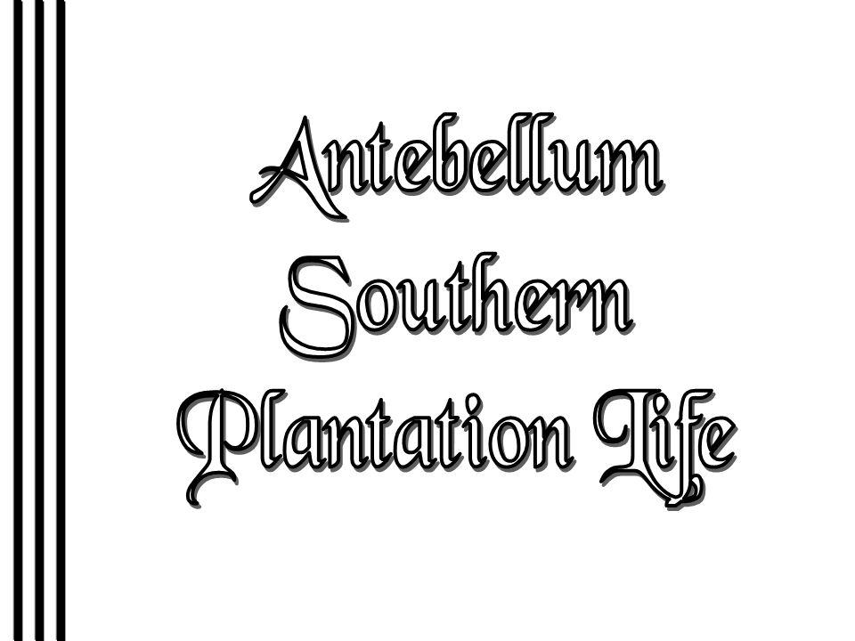 Antebellum Southern Plantation Life