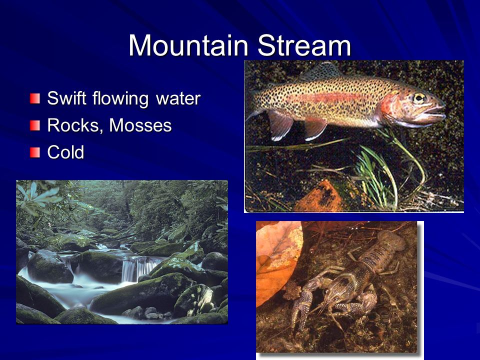 Mountain Stream Swift flowing water Rocks, Mosses Cold