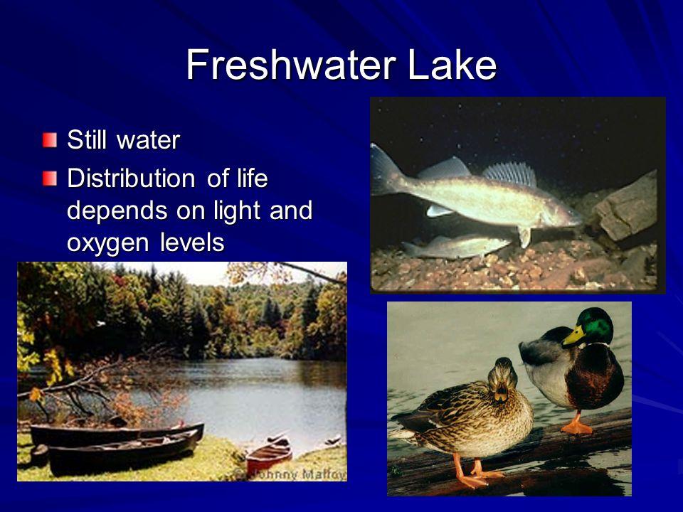 Freshwater Lake Still water