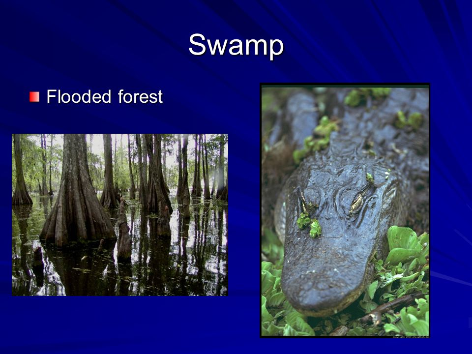 Swamp Flooded forest