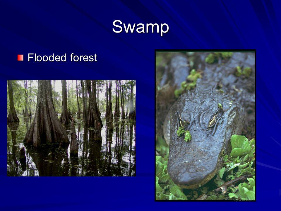 Swamp Flooded forest