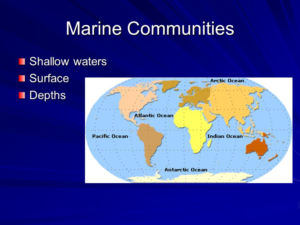 Marine Communities Shallow waters Surface Depths