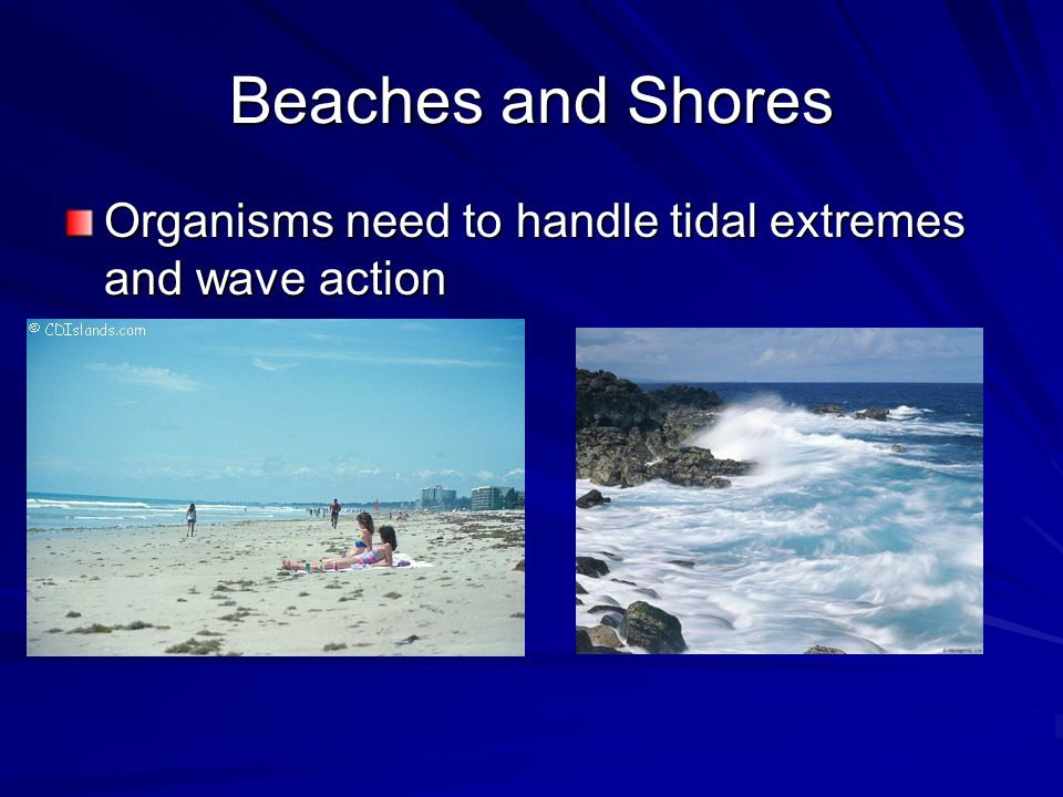 Beaches and Shores Organisms need to handle tidal extremes and wave action