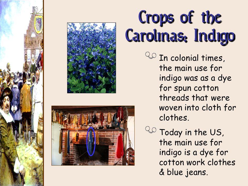 Crops of the Carolinas: Indigo