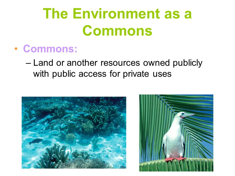 The Environment as a Commons