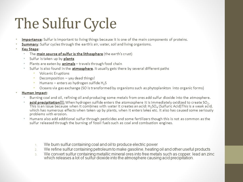 The Sulfur Cycle Importance: Sulfur is important to living things because it is one of the main components of proteins.