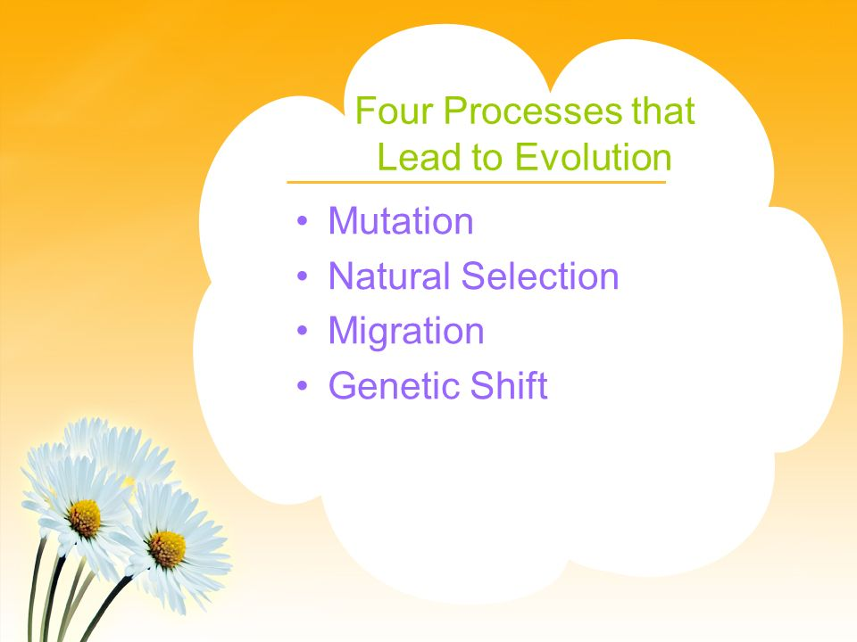 Four Processes that Lead to Evolution