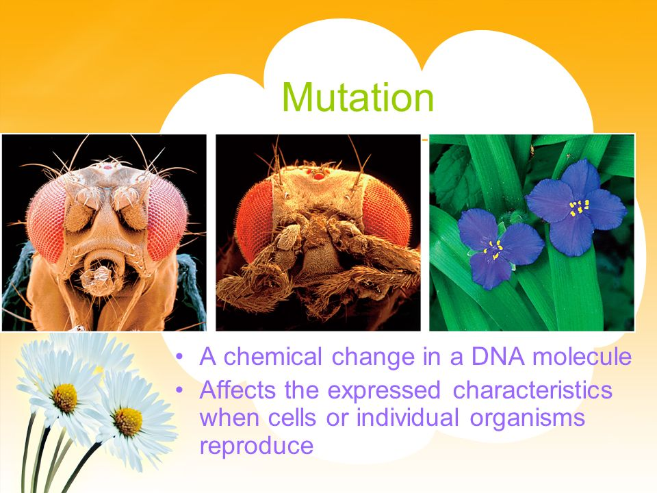 Mutation A chemical change in a DNA molecule