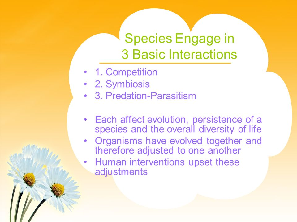 Species Engage in 3 Basic Interactions