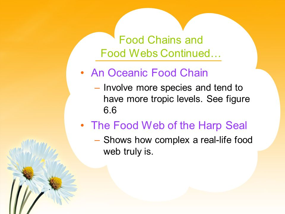Food Chains and Food Webs Continued…
