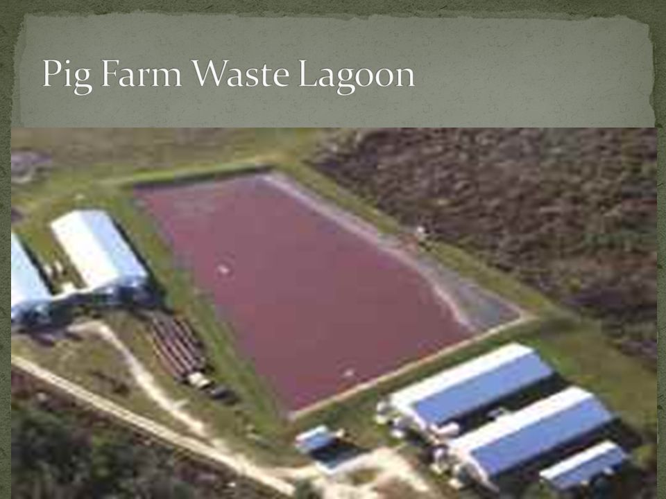 Pig Farm Waste Lagoon