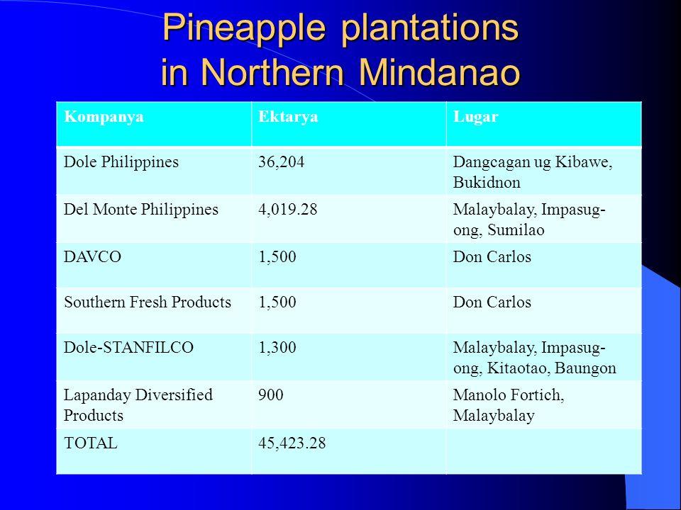 Pineapple plantations in Northern Mindanao