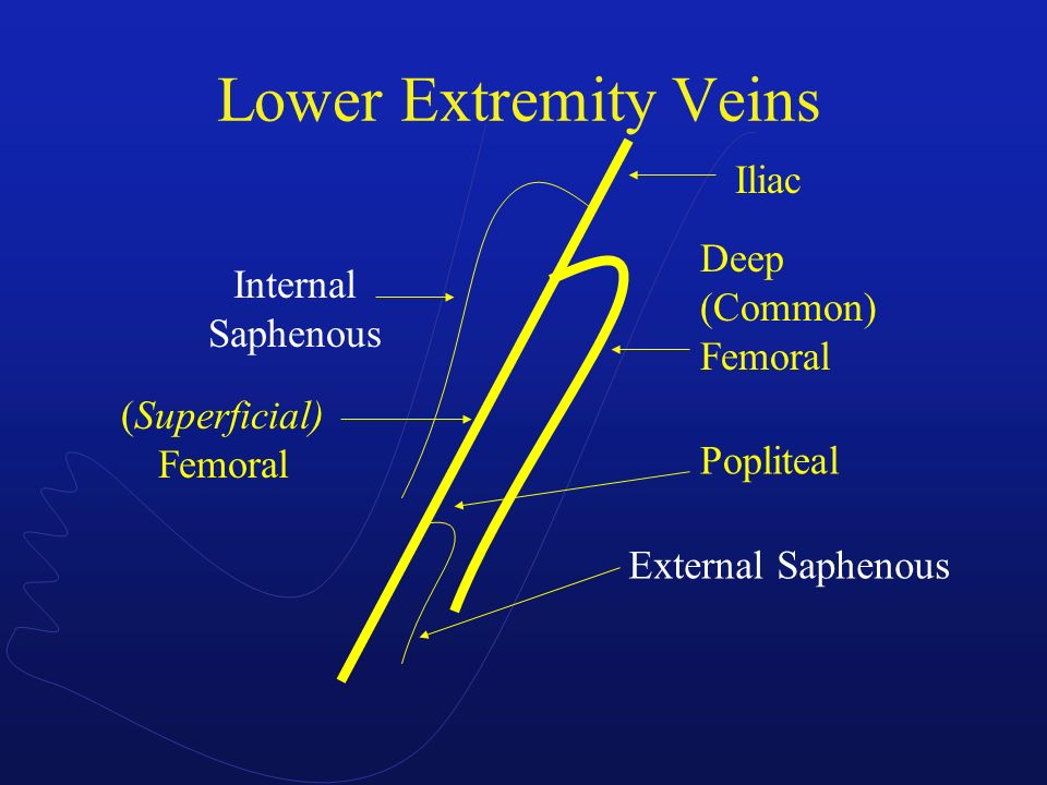 Lower Extremity Veins Iliac Deep (Common) Femoral Internal Saphenous