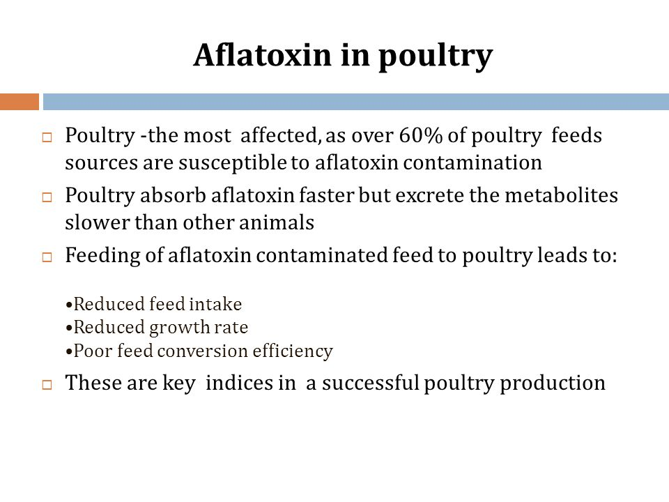 Aflatoxin in poultry Poultry -the most affected, as over 60% of poultry feeds sources are susceptible to aflatoxin contamination.